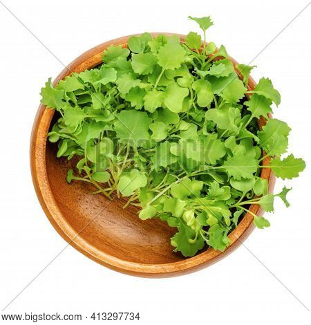Kale Microgreens In A Wooden Bowl. Ready To Eat Green Shoots Of Leaf Cabbage, Seedlings And Young Pl