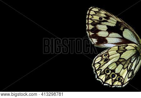 Butterfly Wings On Black Background. Butterfly Wings Pattern Close-up.