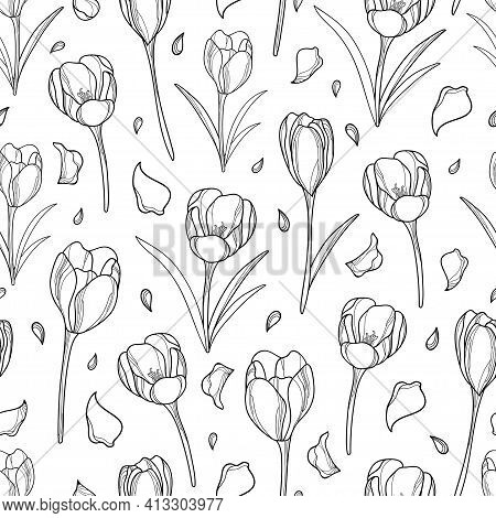 Vector Seamless Pattern With Outline Crocus Or Saffron Flower Bunch And Petals In Black On The White