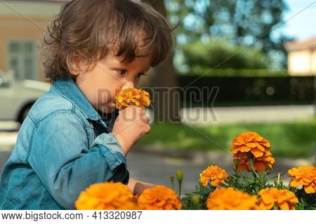 Little Boy Sniffing Flowers Outdoors In Public Park.