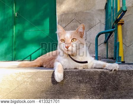 Cute Ginger Cat With An Intelligent And Curiosity Look Is Lying On Steps Near Entrance Door. Close-u