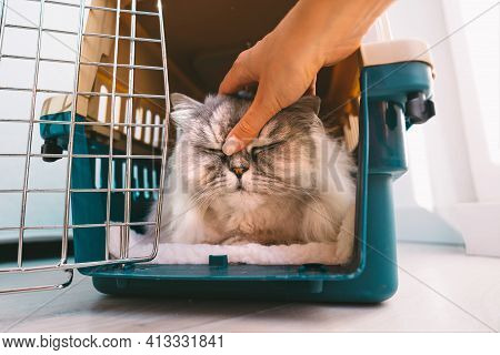 Woman Petting Her Beautiful Relaxed Persian Cat Lying Inside Plastic Pet Carrier Or Travel Box. Pet