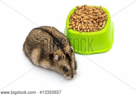 Hamster And Feeding Trough With Wheat Grains On White.