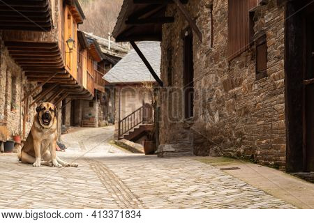 Spanish Mastiff Dog Stands In The Background Of The Rural House. In The Village, Stone House With Wo