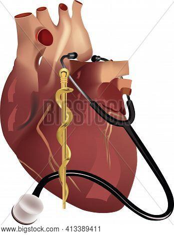 Stethoscope And Human Heart Stethoscope And Human Heart