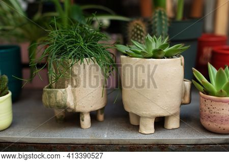 Green Rhipsalis And Agave Succulent Plant In Pots. Home Mini Garden Of Succulents. Home Gardening Co