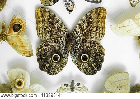Butterfly Wings With Spots. Spread Wings Similar To The Face Of An Animal Among Various Butterflies
