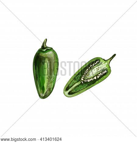 Whole And Half Pepper Serrano. Vector Vintage Hatching Color Illustration. Isolated On White Backgro