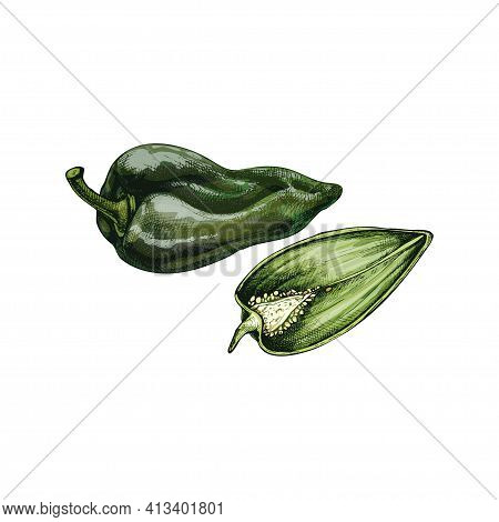 Whole And Half Pepper Poblano. Vector Vintage Hatching Color Illustration. Isolated On White Backgro