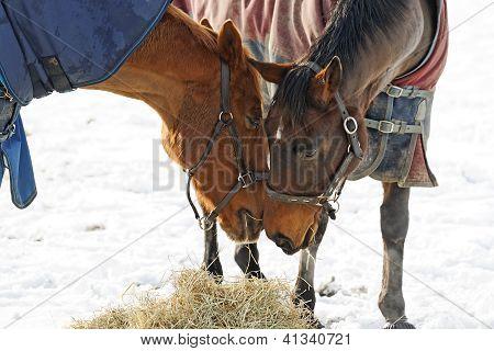 Horses Whispering