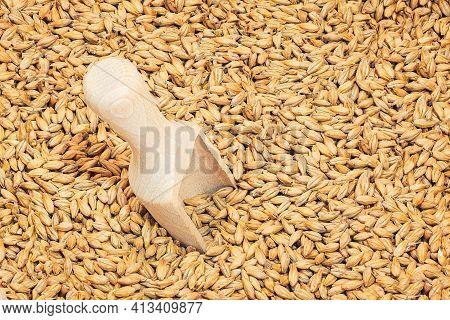 Close Photo Up Of Malt Grains ащк Beer