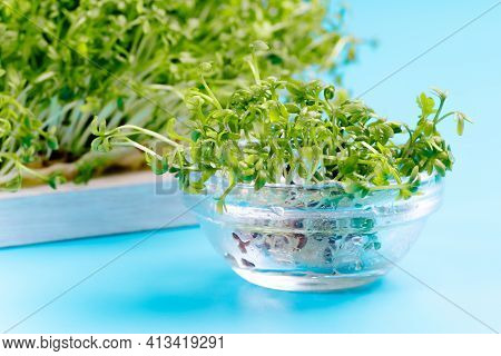 Fresh Microgreens For Salad In A Bowl .planting Microgreens. Germination Of Seeds At Home.vegan And
