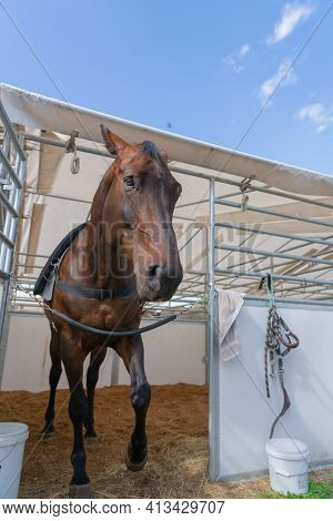 Horse In Stall With Head Out Looking Curiously.