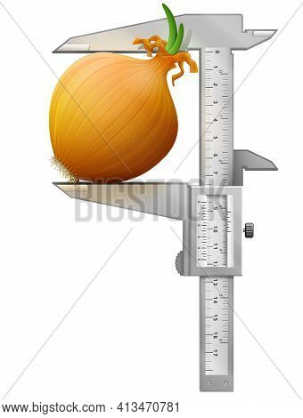 Vertical Caliper Measures Common Onion. Concept Of Shallot Bulb And Measuring Tool. Vector Illustrat