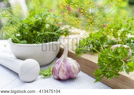 Mortar And Pestle With Fresh Green Herbs Spices. Fresh Dill, Parsley, Arugula In The Pestle And Garl