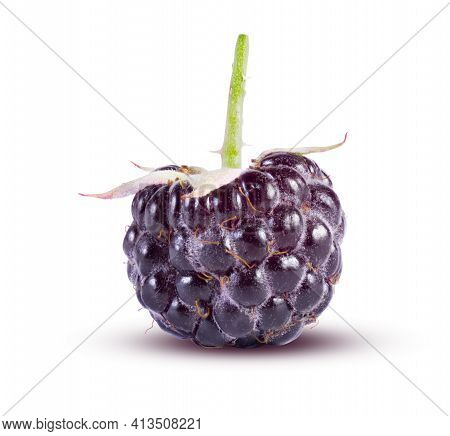 Black Raspberries Isolated On White. Perfectly Retouched, High Resolution And Full Depth Of Field. F