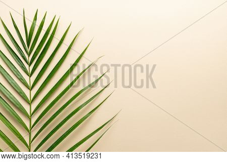 Tropical palm leaves on color background. Summer concept.