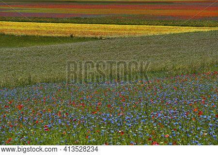 Beautiful Fields Full Of Colors During Lentils Flowering In Castelluccio Di Norcia