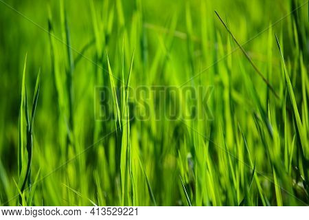 Perfect Green Natural Background Of Fresh Grass In Sunlight