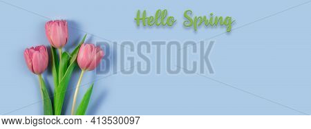 Pink Tulips Flowers On Blue Background. Hello Spring And Easter Concept With Beautiful Fresh Tulips