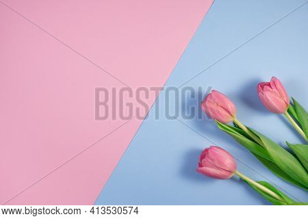 Pink Tulips Flowers On Pink And Blue Background. Card For Mothers Day, 8 March, Happy Easter, Valent