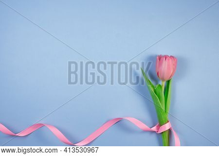 Pink Tulips Flowers With Ribbon On Blue Background. Card For Mothers Day, 8 March, Happy Easter, Val