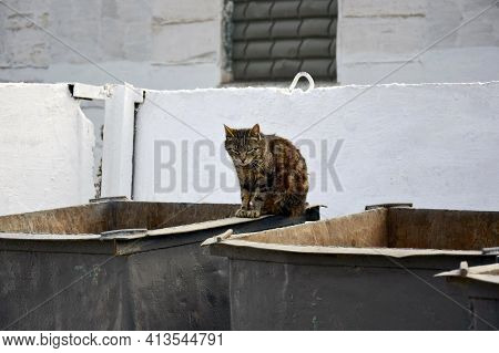 Homeless Cat On The Garbage Container. One Houseless Cat On The Street, Outcast. Unhoused Pet In The
