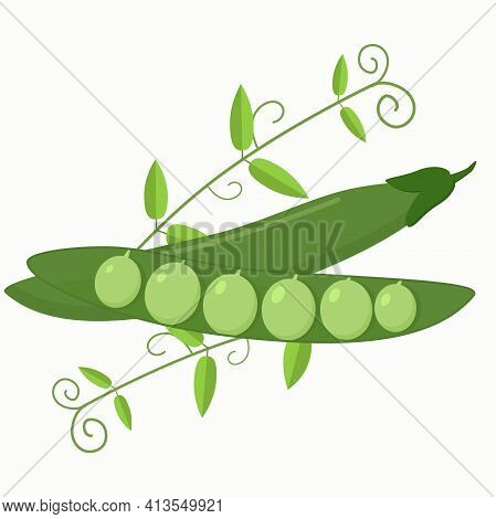 Illustration Of Fresh Green Peas Whole And Open With Peas And Branches On The Background