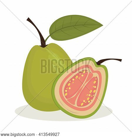 Vector Illustration Of Guavas Isolated On A White Background