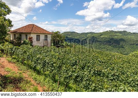 Vineyards, House And Forest In Valley