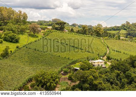 Vineyards And Forest In Valley