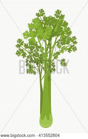 A Bunch Of Fresh Celery, A Proper Nutrition Concept