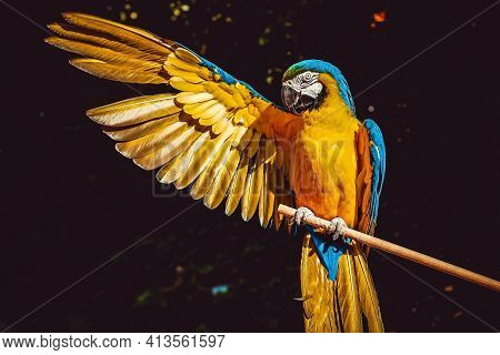 The Macaw Parrots Are The Largest And Most Expensive Parrots.