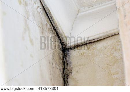 Black Mold, Aspergillus Niger, That Occurs In Damp, Unventilated Rooms