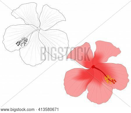 Close-up Image Of A Hibiscus Flower In Two Versions Vector Illustration