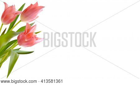 Bouquet Of Realistic Tulips On White Background. Composition From Buds Of Pink Tulips. Template For