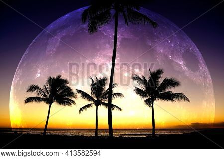 Tropical Palm Trees Silhouette Moon Light Moonrise