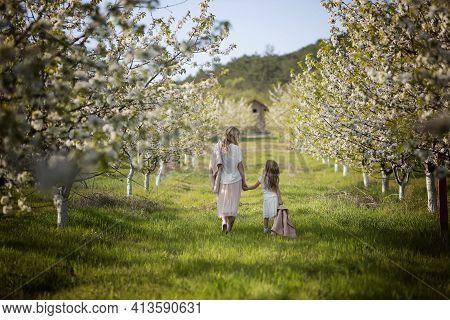 A Mother And A Young Daughter Walk In A Blooming Cherry Orchard. A Mother Loves Her Child. Spring Hi