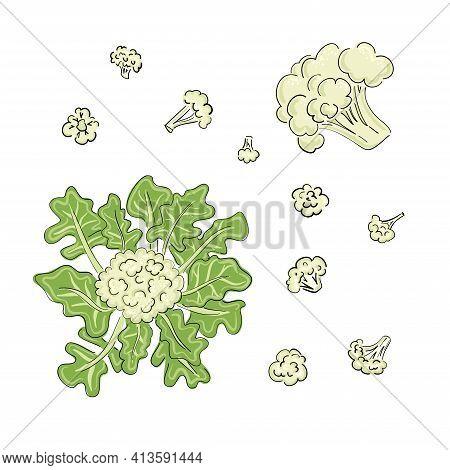 Cauliflower Drawn Cartoon In Sketch Style On Black Background. Hand Drawn Vector Illustration. Cooki