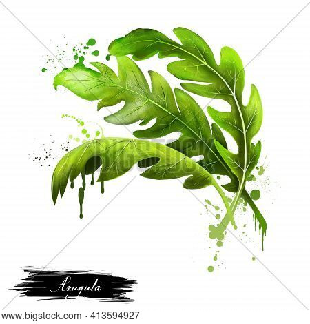 Arugula Icon. Eruca Sativa. Annual Plant Known As Salad Rocket, Rucola Rucoli Rugula Colewort Roquet