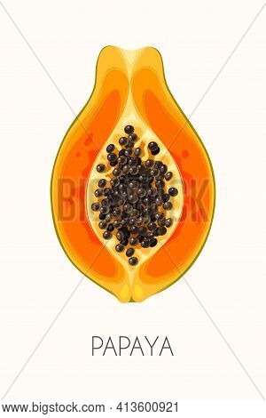 Vector Illustration Of High Detailed Papaya Fruit