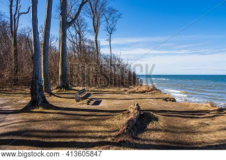 Coastal Forest On The Baltic Sea Coast In Nienhagen, Germany.