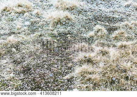 Grass Background With Snowflakes. Magical Autumn Spring Seasonal View Of The Meadow With Hoarfrost.