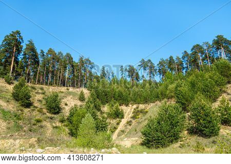 Pine Forest Growing On Steep Slops Of Rocks. Corner Of Nature, Almost Untouched By Human. Nobody's A
