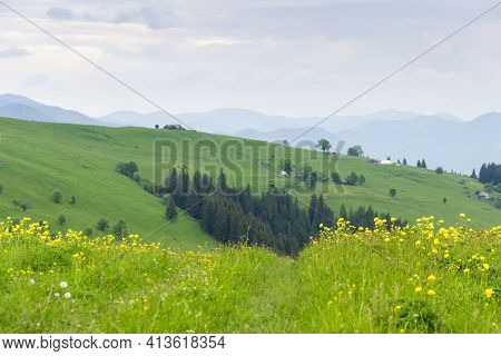 Mountain Range Covered With Hayfields And Alpine Meadow Overgrown Of Trollius With Yellow Flowers, O