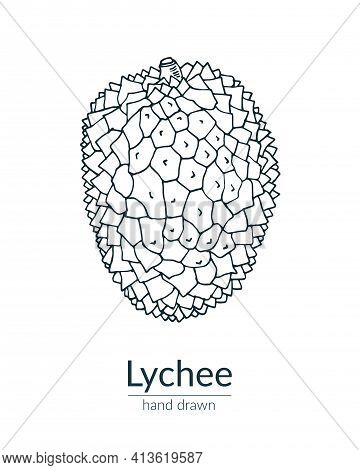 Lychee Fruit Completely Isolated On A White Background. Vector Hand-drawn Illustration.