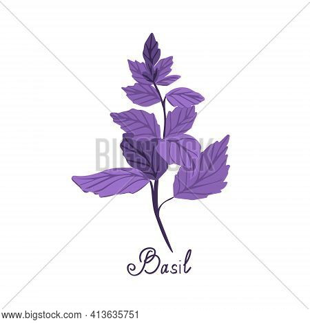 Purple Basil On A White Background Is Isolated. Illustration Of Basil Spice With