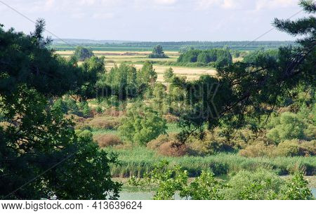 Aggregated Fields, Forest Fields, Greenish Lake Overgrown With Reeds In The Foreground. Humid Contin