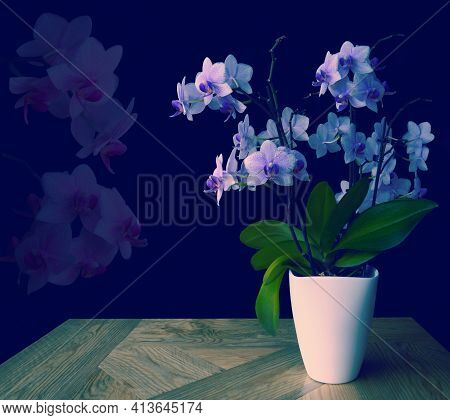Bluish Purple Spotted Orchid,green Leaves,white Pot On Wooden Table,pink Transparent Flower Heads On