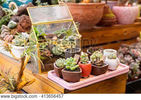 Miniature succulent plants (succulent cactus) background